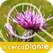 Plant Finder - Images, scientific names, common names of plants now fo